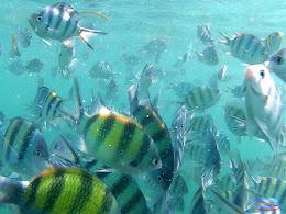 family trip pulau pari 140716 GoPro 26