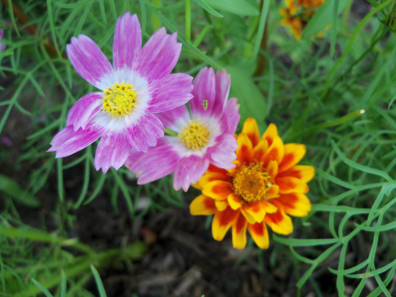 Gardening 2010, Part Three - 101_3796.JPG