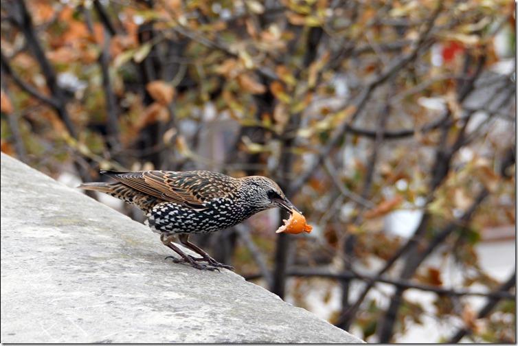 paris starling