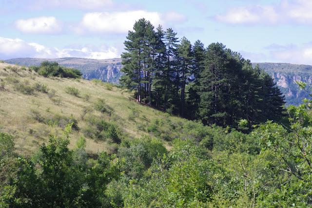Tras le Mont, 820 m, Cocurès (Lozère), 10 août 2013. Photo : J.-M. Gayman