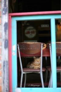平渓線の折返し 終点の「菁桐」駅 ココにも 猫 ねこ ネコ!