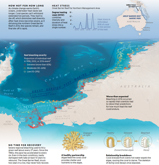 Map showing damage to the Great Barrier reef from the marine heat waves of 2016 and 2017. Half of the Great Barrier Reef has been bleached to death since 2016. Graphic: National Geographic