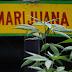 Jamaica May Have A Marijuana Shortage, Report Says