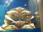 I had the humping crab