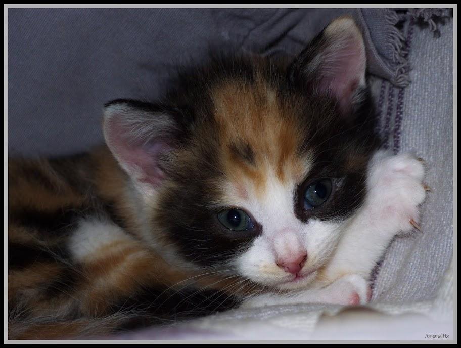 Mes 2 photos  animalier avec le XZ-1 Kitty%252520Junior