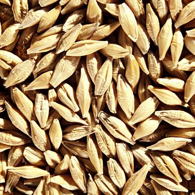 Whole-Grain Barley