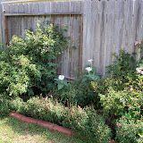 Gardening 2011 - 100_0065.JPG