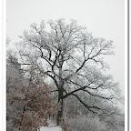 erdő, zúzmara 031.jpg