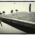 20120706-01-ducks-harbour.jpg