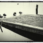 20120706-01-ducks-harbour.jpg