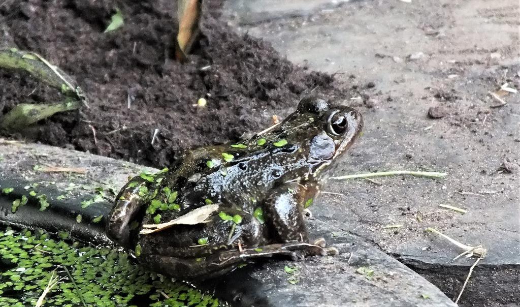 [Frog+July+2017%5B4%5D]