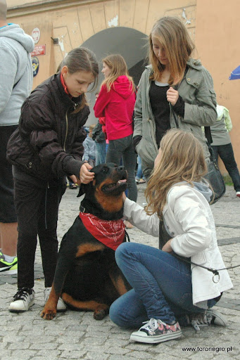 Rottweiler i duże dzieci