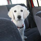 W samochodzi (21.06.2008r.)