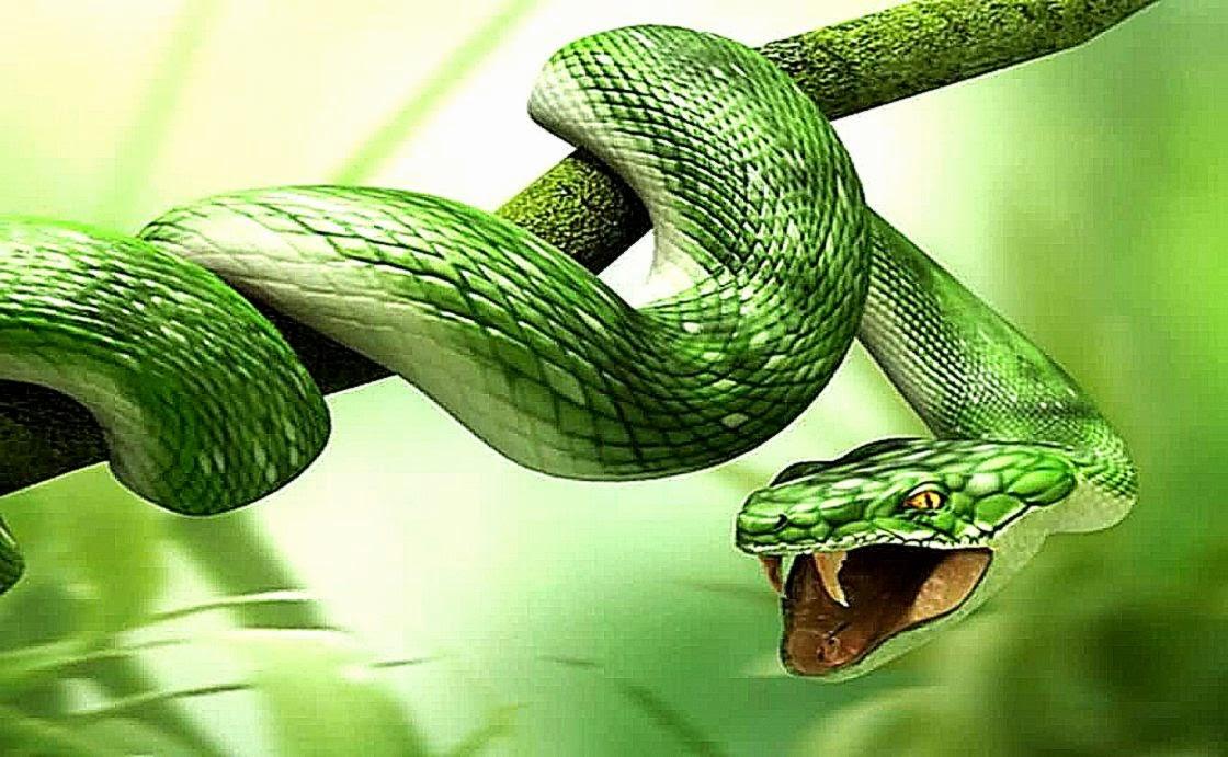 Green snake 3d ball wallpapers hd wallpaper background - Green snake hd wallpaper ...