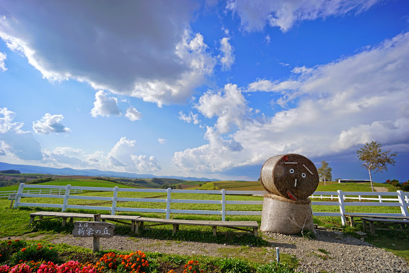 美瑛 新栄の丘 写真1