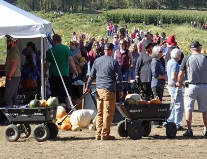 Pumpkin Buyers