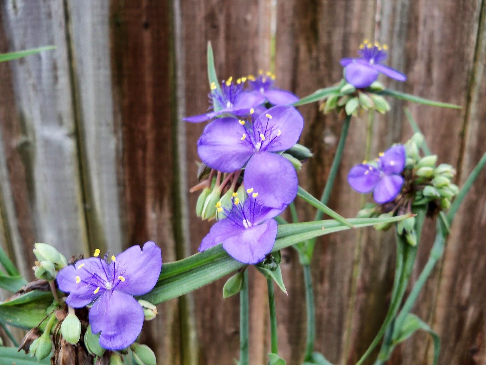 Gardening 2014 - 116_1799.JPG
