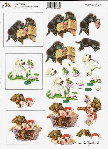 ook dieren (3).jpg