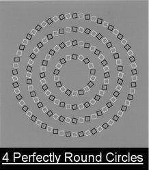 Perfect round circles..