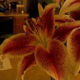 Bouquets - 101_0107.JPG