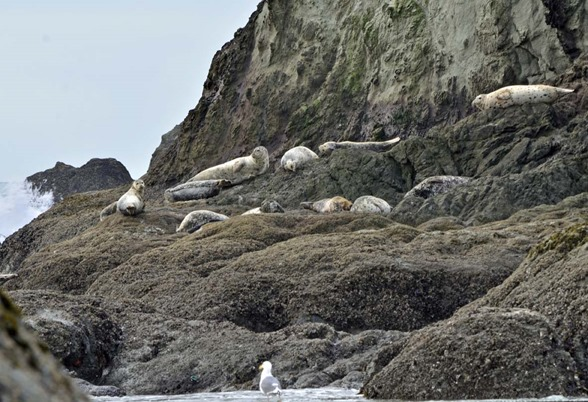 Coquille Beach Seals