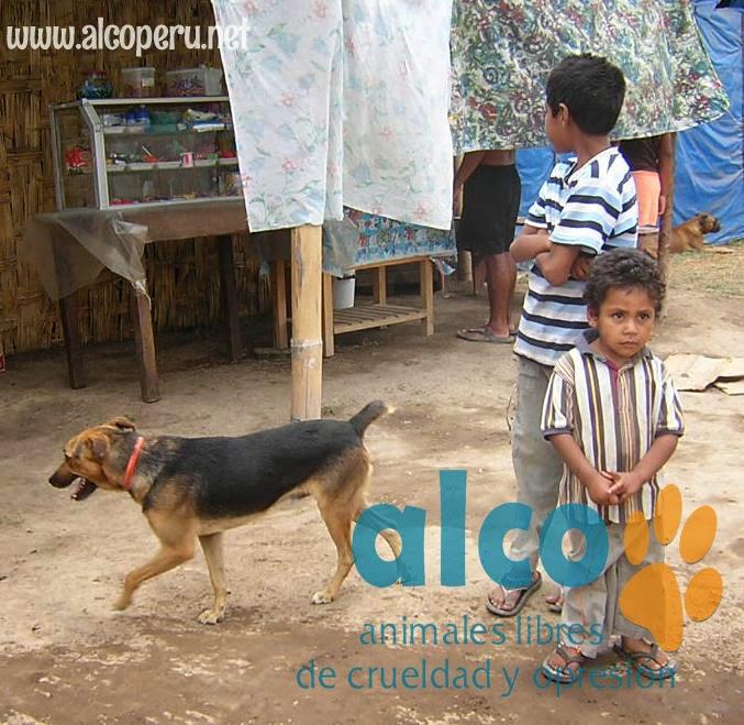 Asistencia Hualcara Cañete terremoto 2007 (10)