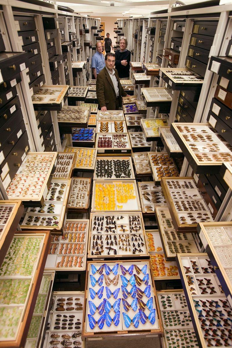 di storia naturale-museo-collezione-5
