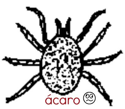 acaro (2).jpg