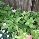 Gardening 2013 - IMG_20130523_192100.jpg