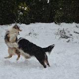 2013-02-24 Sneeuw
