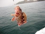 らすくのページ 釣り日記 2011年5月