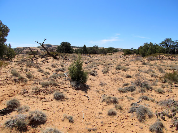 Old dozer path near Cowboy Cave