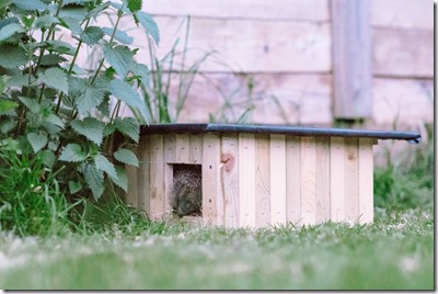 Hedgehog house. Photo: flyingcanadianphotography.com