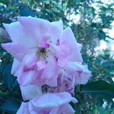 Gardening 2013 - IMG_20130318_162912.jpg