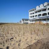 West Wharf Dune Restoration - DSCN2830.JPG