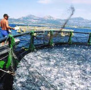 Aquaculture : Ensemencement d'alevins