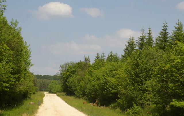 Combe de l'Air, Forêt de Châtillon (Côte d'or), juin 2006. Photo : J.-M. Gayman