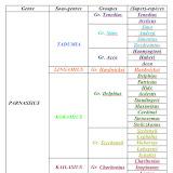 Parnassidae - systematique_parnassidae1.jpg