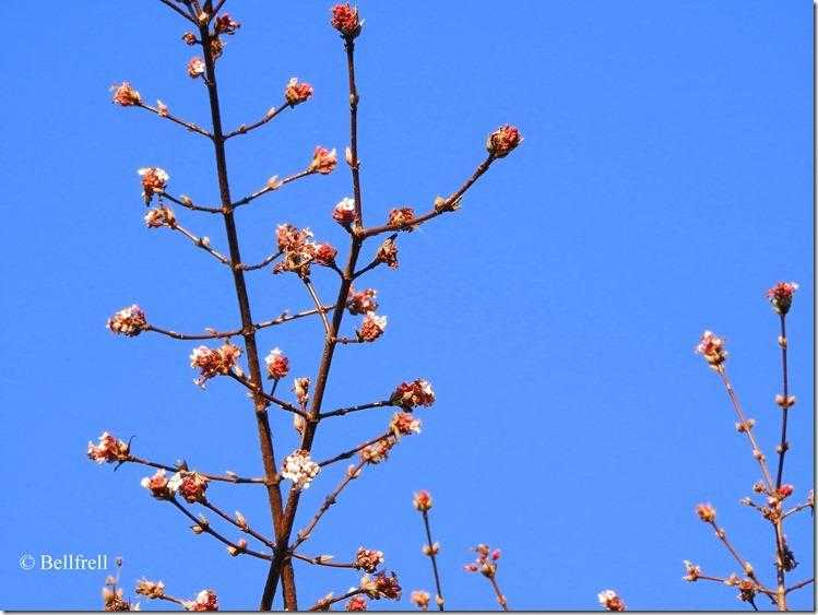 Blumenschmuck
