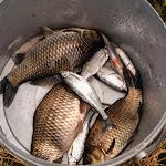 20140615_Fishing_Velikiy_Oleksyn_013.jpg