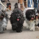 Honden Wandel 3-Daagse 2010