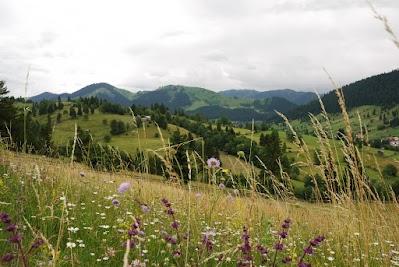 Bunte Blumenwiesen bei Sadova