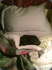 Maggie bedtime 02042015