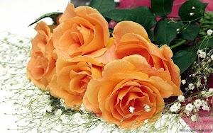 imagini-cu-flori-pentru-desktop-2.jpg