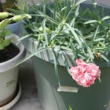 Gardening 2012 - IMG_3769.JPG
