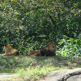 Pittsburgh Zoo Revisited - DSC05101.JPG