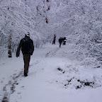Зимняя уборка в Дендрарии 074.jpg