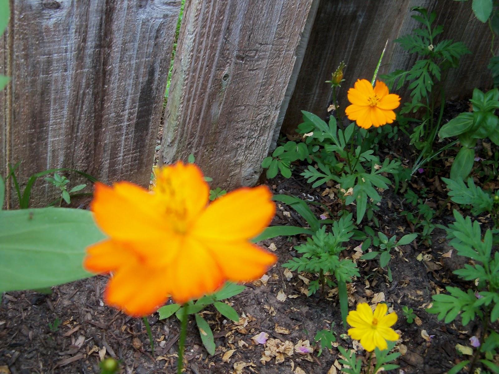 Gardening 2012 - 115_1824.JPG