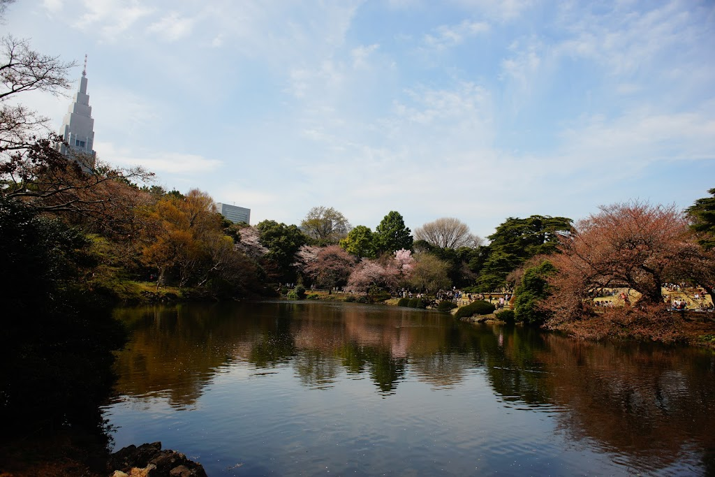 Tokyo hanami