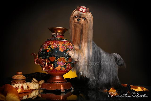 My Simuran Brava Fortuna (Фрося) 12318323